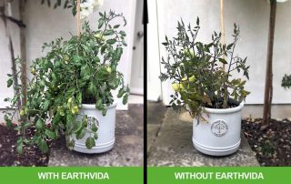 With and without Earthvida